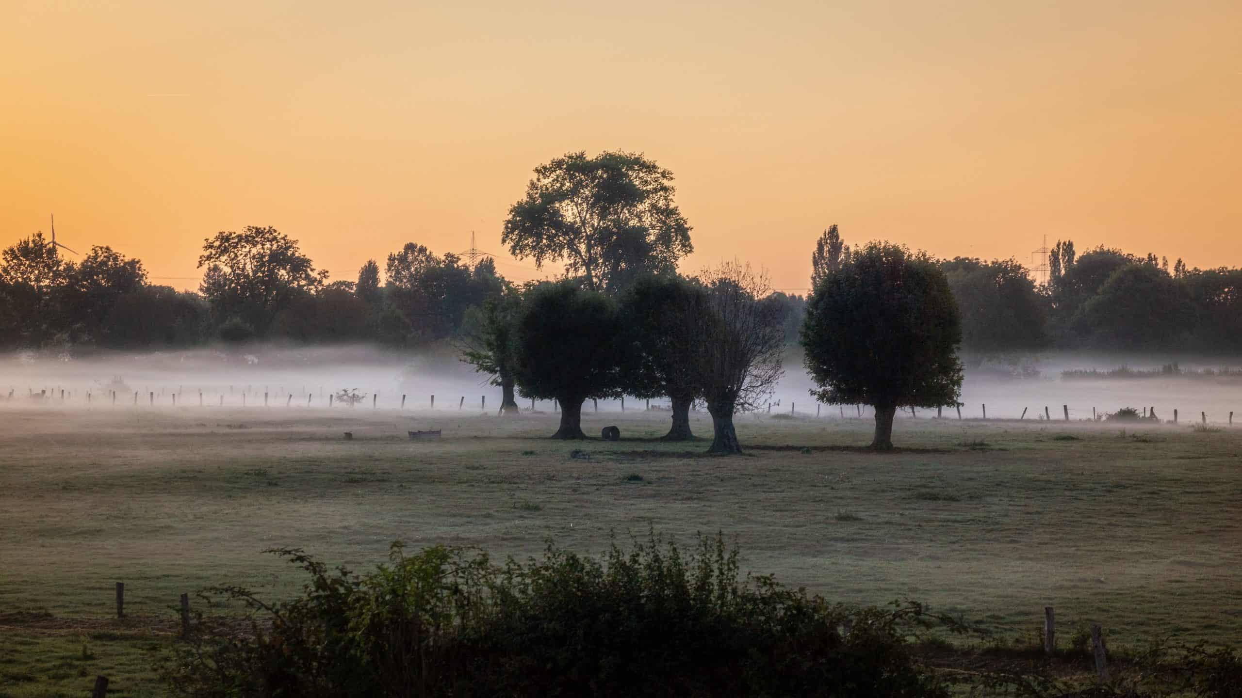 Das Bild zeigt die Momm-Niederung mit Nebelschwaden